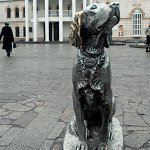 Котенок с улицы Лизюкова и белый Бим - черное ухо